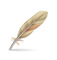 feather isolated vector image vector image