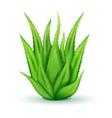 Realistic Aloe Leaves vector image