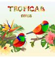 tropical seamless border tropical birds vector image vector image