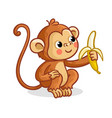 monkey on a white background eats a banana vector image vector image