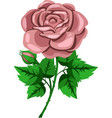 beige rose flower vector image