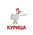 cartoon chicken flashcard for children vector image vector image