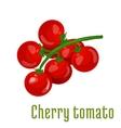 Cherry tomato vegetable icon vector image