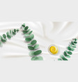 eucalyptus branch with leaves and oil in bowl vector image vector image