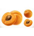 apricot fresh fruit 3d realistic icon vector image vector image