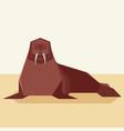 flat design walrus vector image vector image