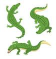 green alligators set wild animal isolated vector image vector image