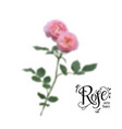 roses blur flowers vector image vector image