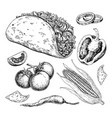 taco drawing with vegetable traditional mexican vector image vector image