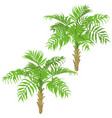 young palm trees on white background vector image vector image