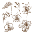Hand drawn orchid flower set vector image
