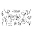 magnolia flower set hand drawn botanical vector image vector image
