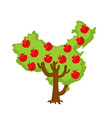 patriotic apple tree china map apples chinese vector image vector image