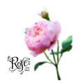 rose bud blur vector image vector image