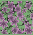 seamless pattern primula vector image