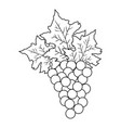 wine grapes isolated icon vector image
