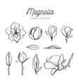 magnolia flower set hand drawn botanical 3 vector image