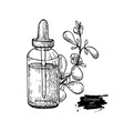 marjoram essential oil bottle and marjoram leaves vector image vector image