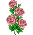 bouquet beige rose branch vector image vector image