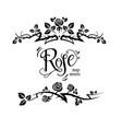 elegant roses design vector image vector image