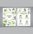 herbs and spices posters herb plant spice hand vector image