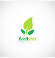 seed plant green organic logo vector image