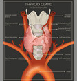 thyroid system image vector image vector image