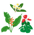 tropic flowers set vector image vector image