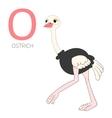 Alphabet letter O ostrich children vector image