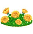 calendular flowers in bush vector image vector image