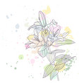 drawing lily flower vector image vector image