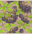 elderberry seamless pattern vector image vector image