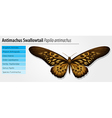 Giant African Swallowtail vector image vector image