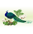 peacock beauty exotic bird natural and tropical vector image