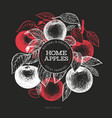 apple branche design template hand drawn garden vector image vector image