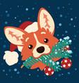 cute corgi dog in santa hat with christmas tree vector image vector image