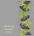 elderberry background vector image vector image
