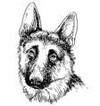 German Shepherd 01 vector image vector image