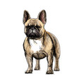 hand drawing a beautiful french bulldog dog on vector image