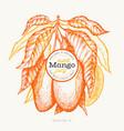 mango design template hand drawn tropic fruit vector image