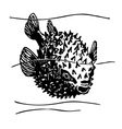 porcupinefish vector image vector image