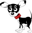 little chihuahua vector image