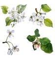 watercolor apple tree flowers vector image