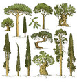 big set engraved hand drawn trees include pine vector image
