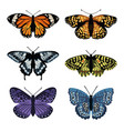 set with isolated butterflies hand drawn design vector image vector image