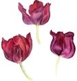 watercolor pink tulip vector image vector image