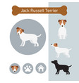 jack russell dog breed infographic vector image