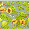 nutmeg pattern vector image vector image