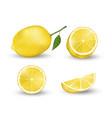 realistic set lemon elements fresh yellow vector image