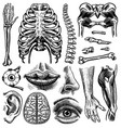 anatomy human bones and muscles set organ vector image vector image